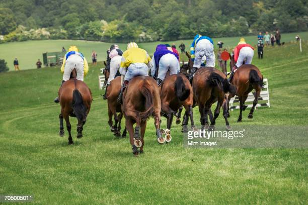 Group of riders on racehorses racing on a course, during a steeplechase.