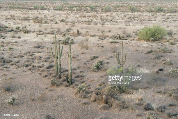 Group of Saguaro Cacti in the North Phoenix desert shot from a low flying hot air balloon in Phoenix