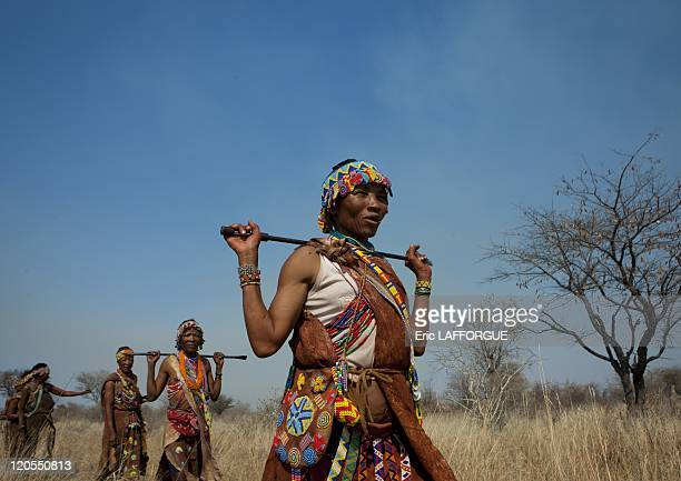 Group Of San Women Walking In The Bush in Namibia on August 22 2010 San are an ethnic group of South West Africa They live in the Kalahari Desert...