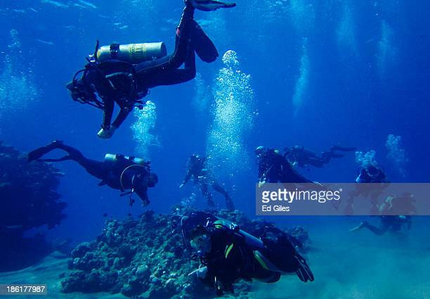 A group of SCUBA divers follow a dive guide on a diving trip on October 27 2013 in the Red Sea near the resort town of Sharm El Sheikh Egypt Sharm...