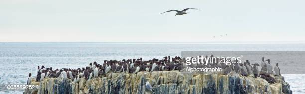 Group of seabirds