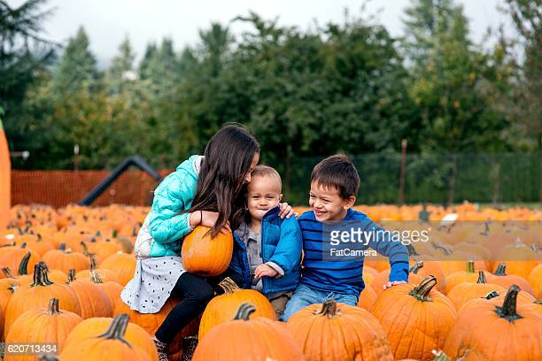 group of siblings sitting together in a pumpkin patch - pumpkin patch stock photos and pictures