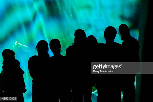 Group of silhouetted people watching fish through aquarium glass at the Montreal Biodome, Montreal, Quebec, Canada
