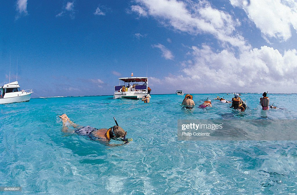 Group of snorkelers looking at stingrays : Stock Photo