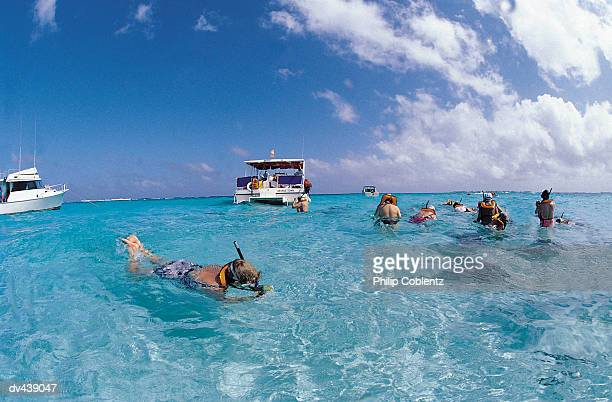 Group of snorkelers looking at stingrays