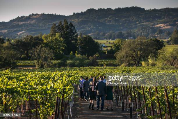 A group of sommeliers tour the vineyards at Silver Oak Cellars winery on October 7 near Healdsburg California A cool spring and mild summer have...