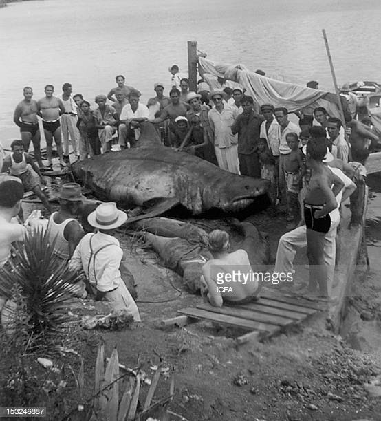 A group of spectators surround a great white shark lying on the shoreline in Cuba circa 1940