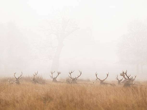 Group Of Stag Deer Resting In Foggy Park Wall Art