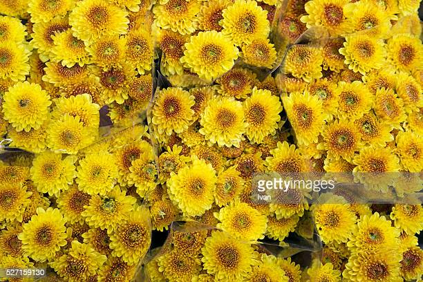 A Group of Still-life Yellow Daisy