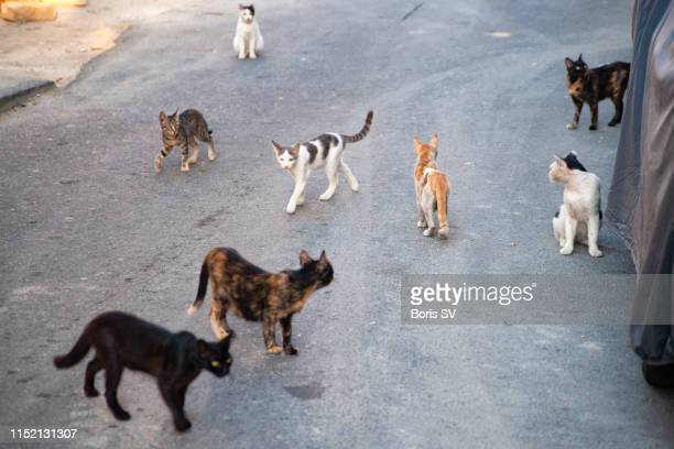 group of stray cats - undomesticated cat stock pictures, royalty-free photos & images
