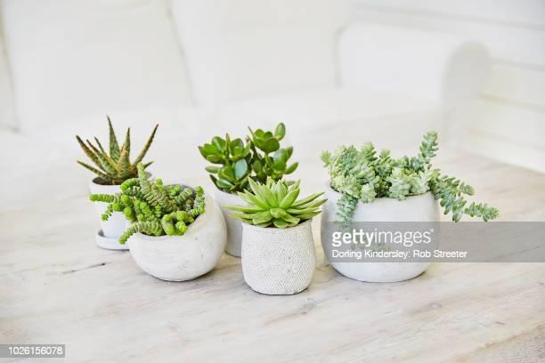 Group of succulents in concrete pots