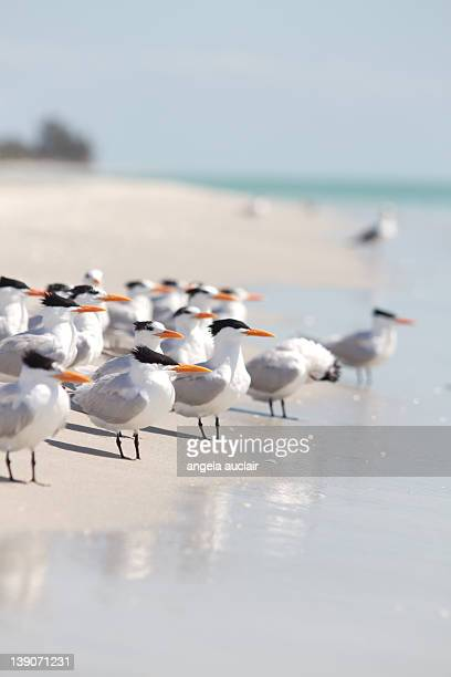 Group of terns on sandy beach