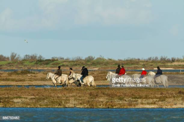 A group of tourists doing a horseback ride between the marshes of the Camargue Regional Nature Park, France. Horseback riding.