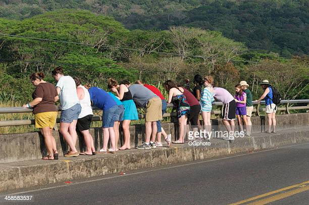 group of tourists looking over a bridge - ogphoto stock pictures, royalty-free photos & images