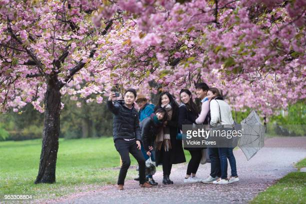 A group of tourists take a selfie photograph with a mobile phone under cherry blossom trees during rain and wet weather on April 30 2018 in Greenwich...