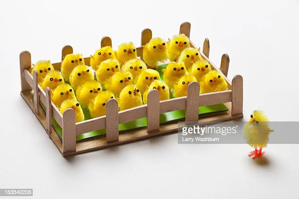 A group of toy Easter chicks fenced in with one on the outside of the fence