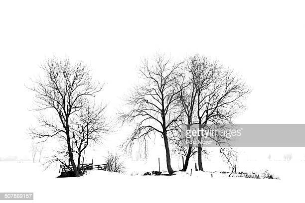Group of trees in snowy landscape