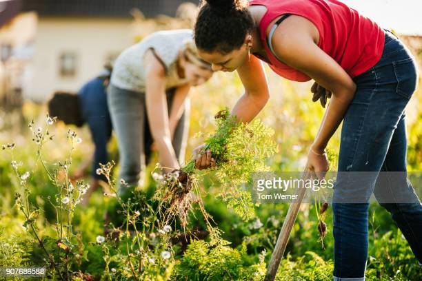 group of urban farmers helping each other maintain small organic crop - self sufficiency stock pictures, royalty-free photos & images