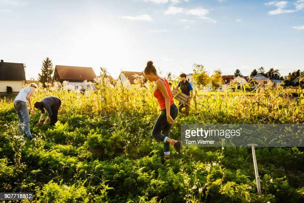 group of urban farmers tending to organic crops - self sufficiency stock pictures, royalty-free photos & images