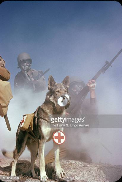 A group of US Army soldiers rifles in hand wear gas masks during a training exercise related to chemical attacks California 1943 Along with the...