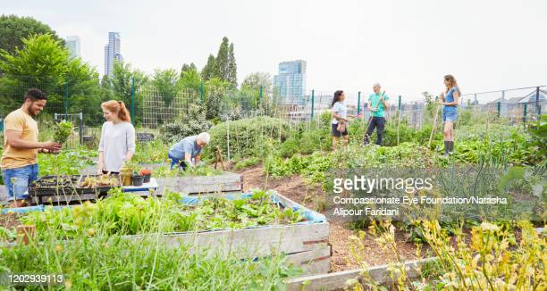 group of volunteers working in community garden - compassionate eye foundation stock pictures, royalty-free photos & images
