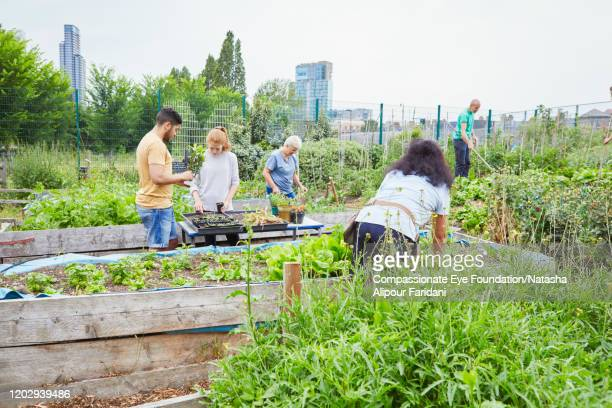 group of volunteers working in community garden - community stock pictures, royalty-free photos & images