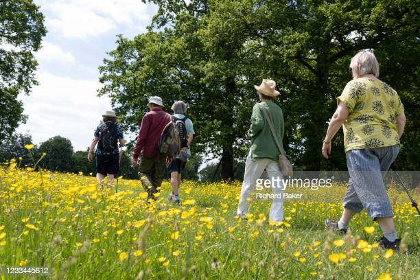 Group of walking friends on a public footpath, pass through a meadow of buttercups, on 13th June 2021, in Kemsing, Kent, England.