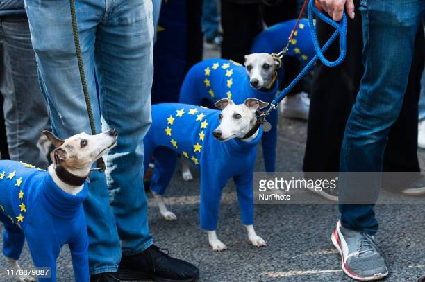 A group of whippets takes part in 'Together for the Final Say' march through central London to demand a public vote on the outcome of Brexit on 19...