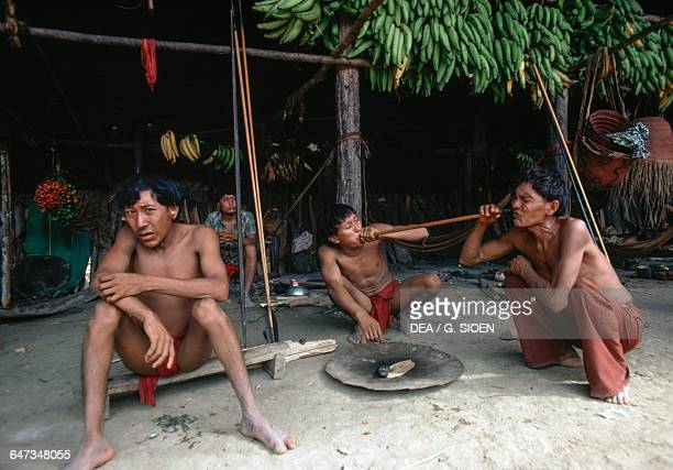 Group of Yanomami men taking Yopo Anadenanthera colubrina seeds used to induce a state of trance and visions and to communicate with the spirits...