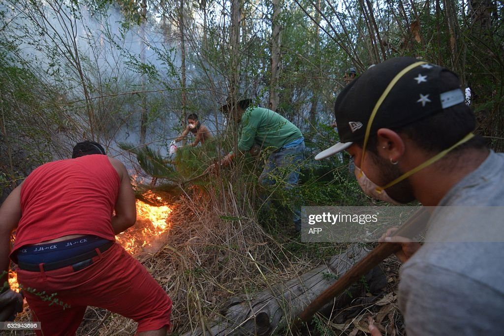 A group of young volunteers from the nearby city of Lirquen, work in a effort to extinguish a forest fire in Concepcion, Biobio region, Chile on January 28, 2017. Forest fires ravaging southern Chile have now killed 11 people, President Michelle Bachelet said Saturday, as firefighters waged an all-out battle to extinguish the raging infernos. / AFP / Guillermo SALGADO