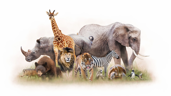 Group of Zoo Animals Together Isolated 989561914