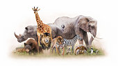Group of Zoo Animals Together Isolated