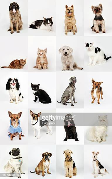 group portrait of cats and dogs - dog and cat stock photos and pictures