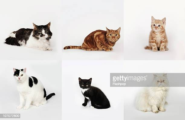 Group portrait of cats