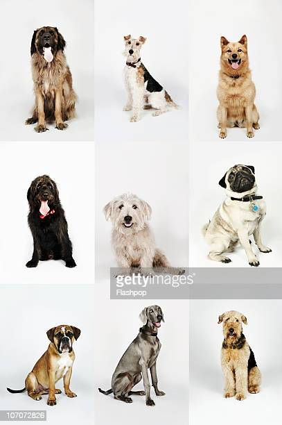 group portrait of dogs - group of animals stock pictures, royalty-free photos & images