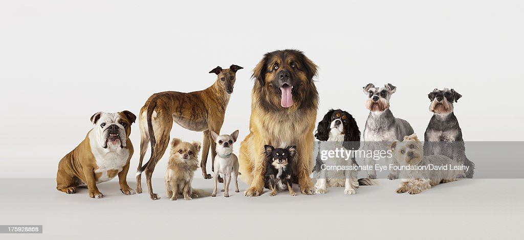 Group portrait of dogs : Stock Photo