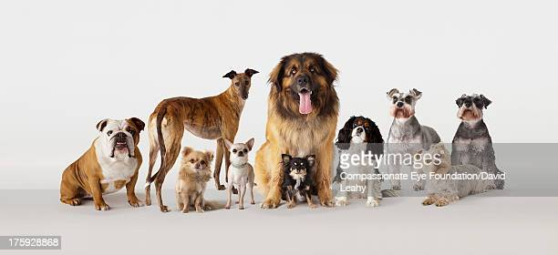 group portrait of dogs - un animal fotografías e imágenes de stock