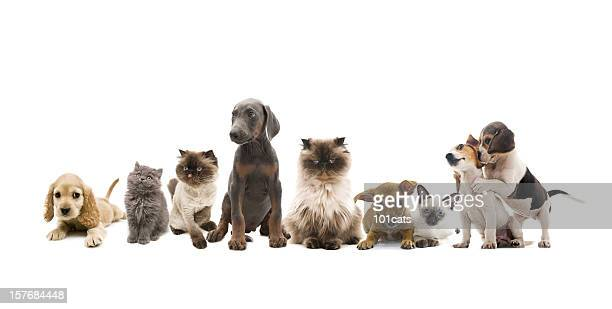 group portrait of pets - dog and cat stock photos and pictures