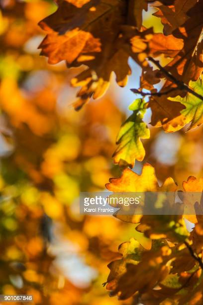 Grouping of leaves in autumn colors