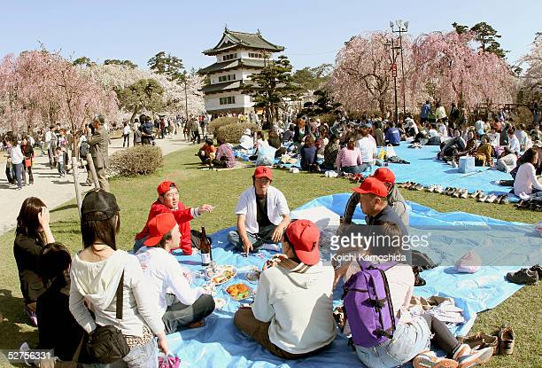 Groups of people enjoy a meal during The Hirosaki cherry blossom festival at Hirosaki Park on May 4 2005 in Aomori Prefecture Japan Hirosaki Park is...