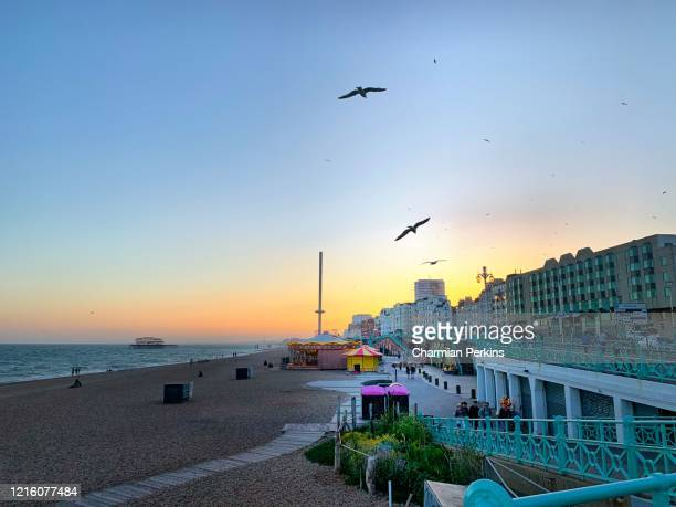groups of seagulls soaring into the sky, birds flying together at sunset - brighton beach england stock pictures, royalty-free photos & images