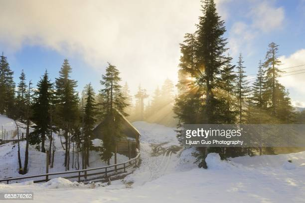 grouse mountain bear den at misty sunset, vancouver, bc - grouse mountain stock photos and pictures