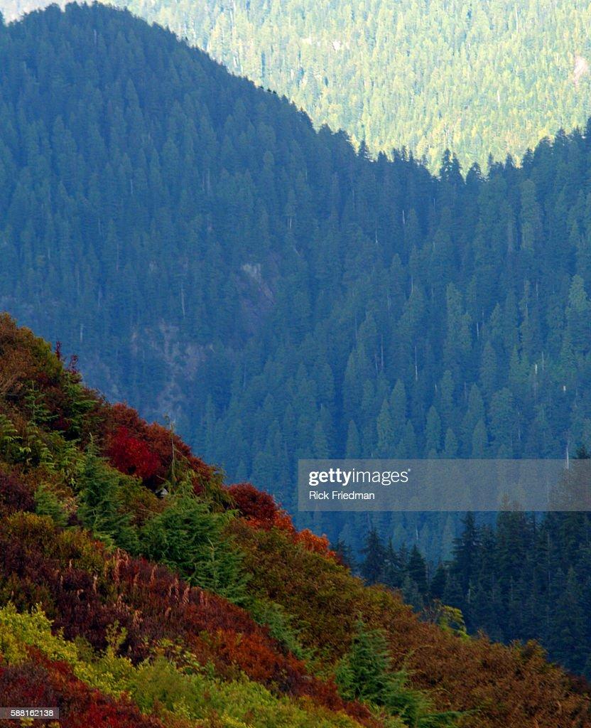 Grouse Mountain : News Photo