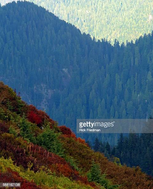 Grouse Mountain in British Columbia Cananda