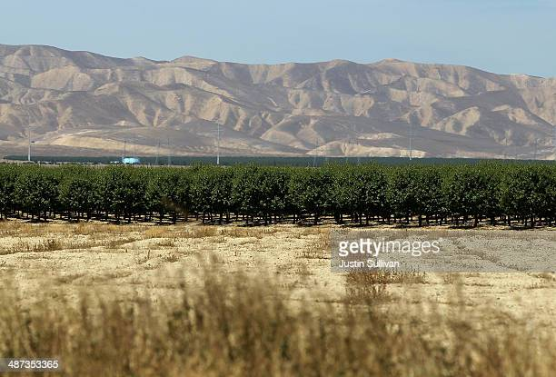 A grove of almond trees sits at the base of dry and barren hills on April 29 2014 near Firebaugh California As the California drought continues...