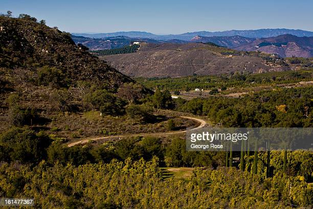 A grove of avocados is viewed from Mt Palomar Road looking into the Rincon Valley on January 4 2013 near Escondido California The interior region...
