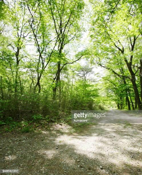 Grove of the fresh green