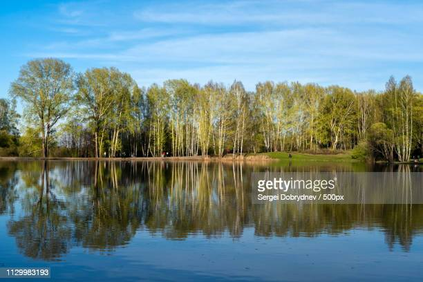 grove on the shore of the lake - sergei stock pictures, royalty-free photos & images