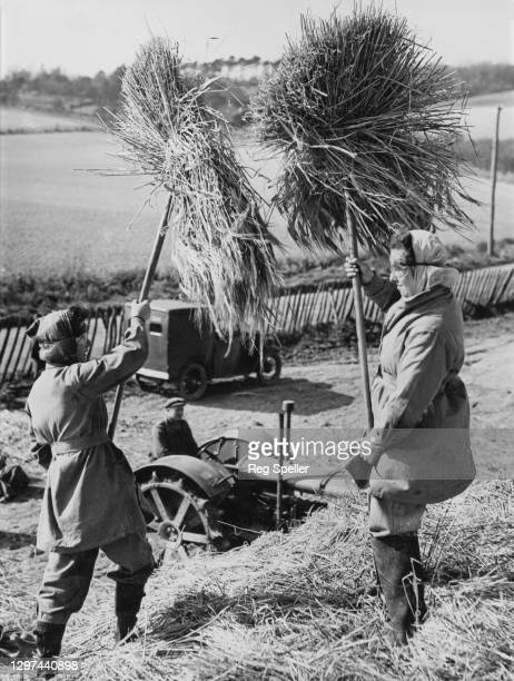 Groves and E French, two members of the Women's Land Army at work forking barley into a threshing machine on 24th March 1943 on farmland in...