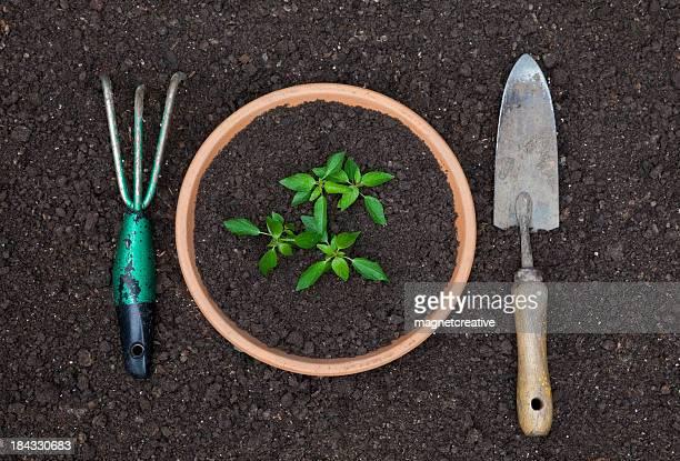 Cultive sus propios la cena